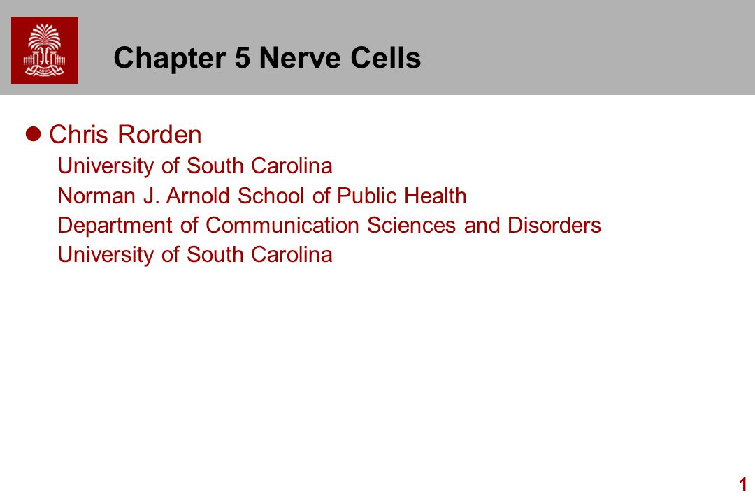 Chapter 5 Nerve Cells Chris Rorden University of South Carolina