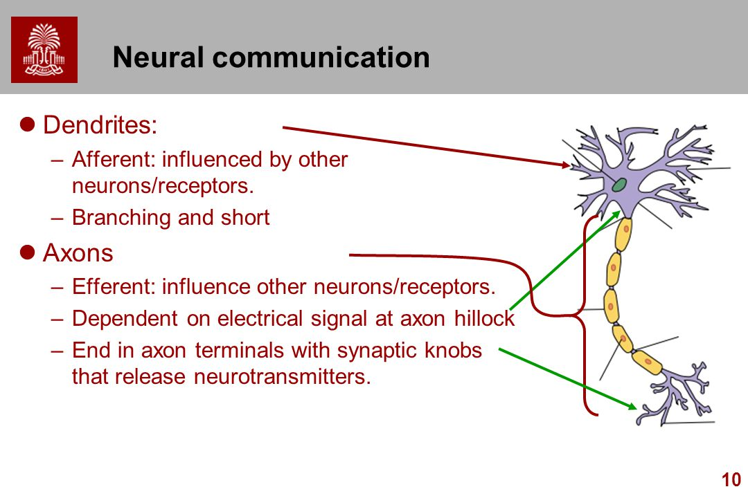 Neural communication Dendrites: Axons