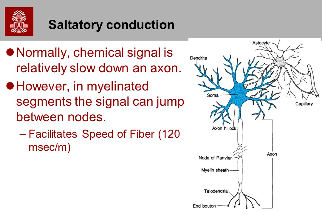 Normally, chemical signal is relatively slow down an axon.