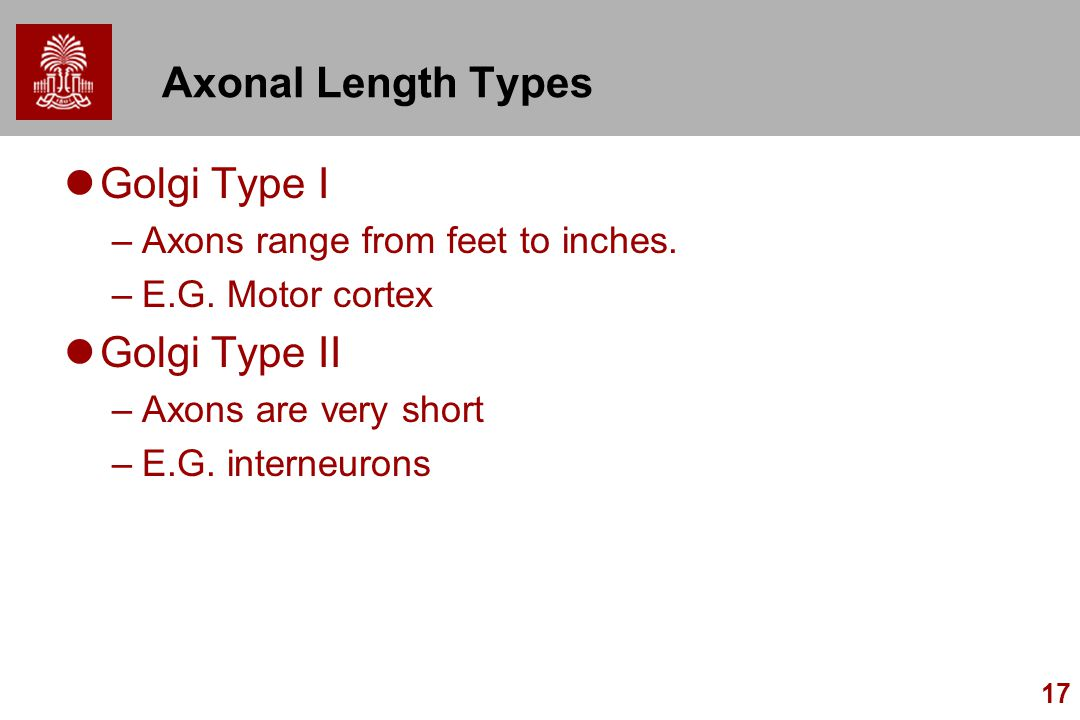 Axonal Length Types Golgi Type I Golgi Type II