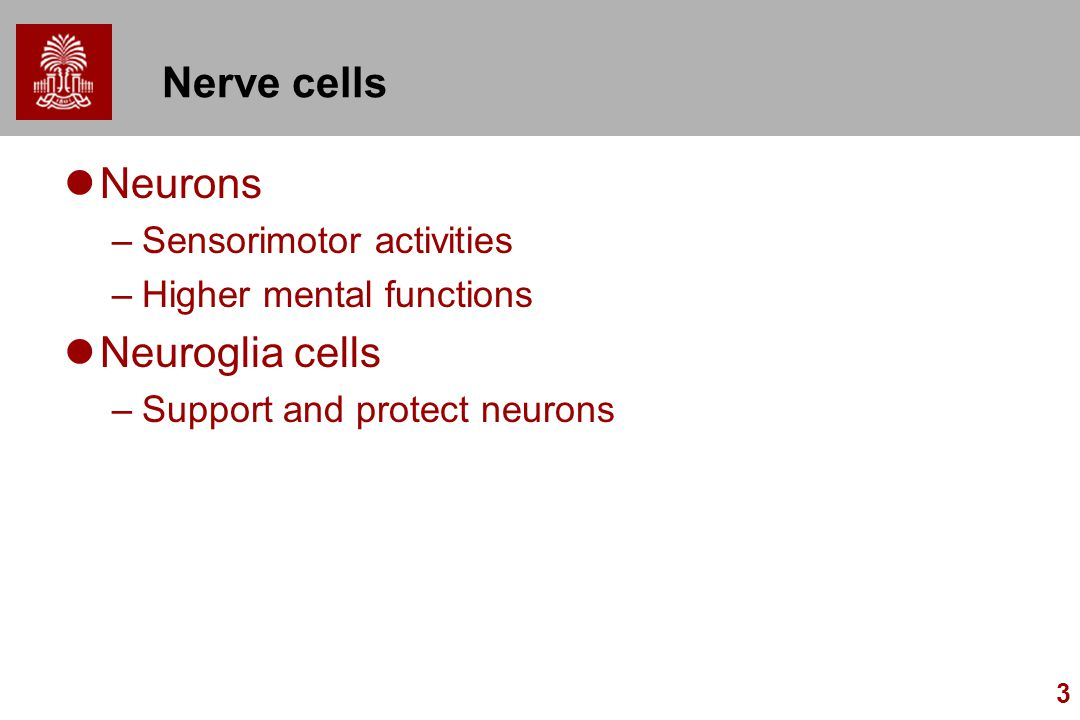 Nerve cells Neurons Neuroglia cells Sensorimotor activities