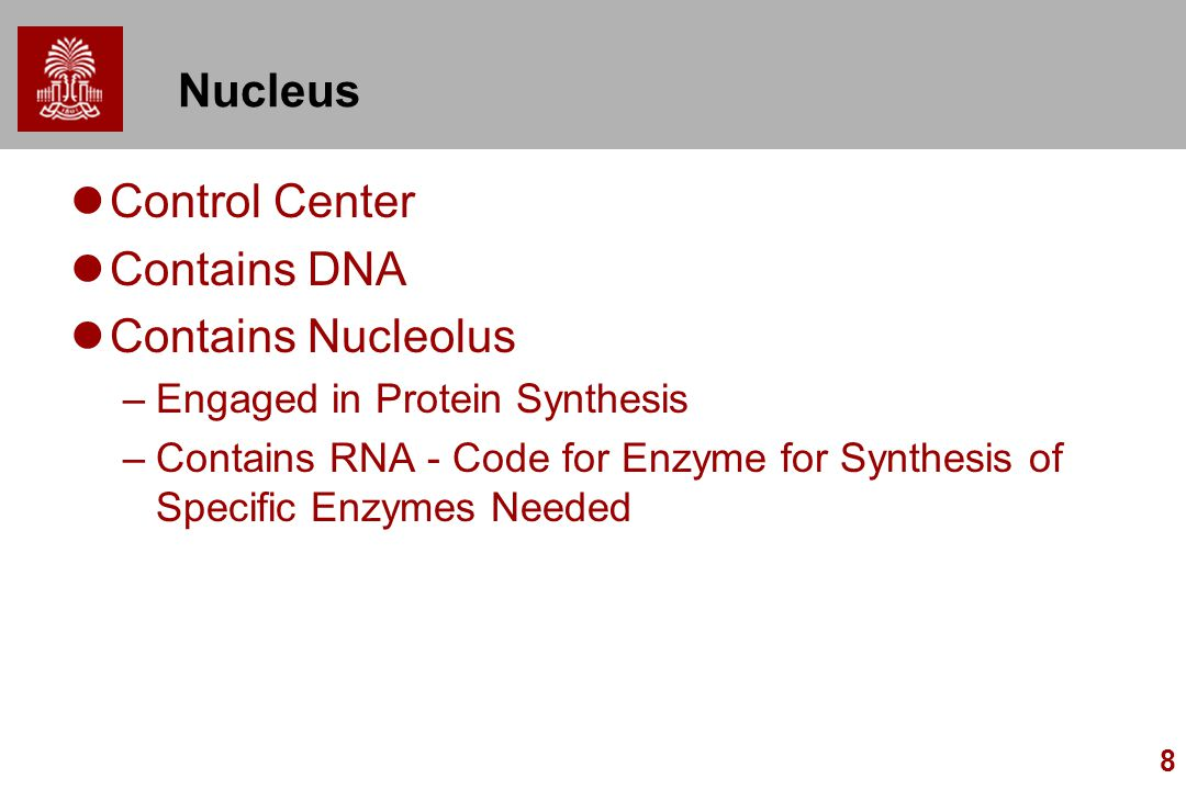 Nucleus Control Center Contains DNA Contains Nucleolus