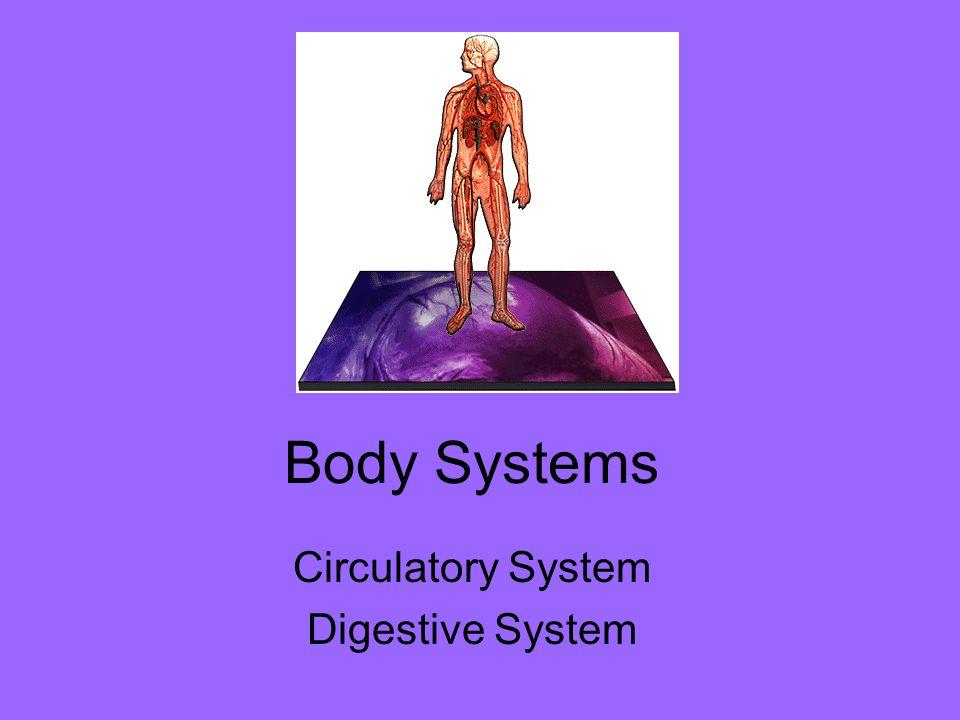 Circulatory System Digestive System