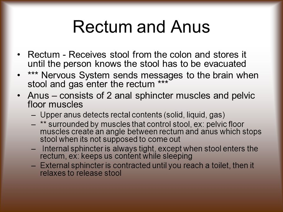 Rectum and Anus Rectum - Receives stool from the colon and stores it until the person knows the stool has to be evacuated.
