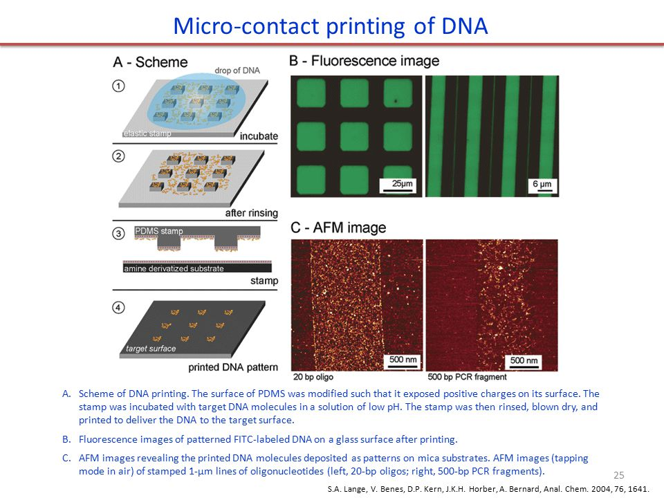 Micro-contact printing of DNA