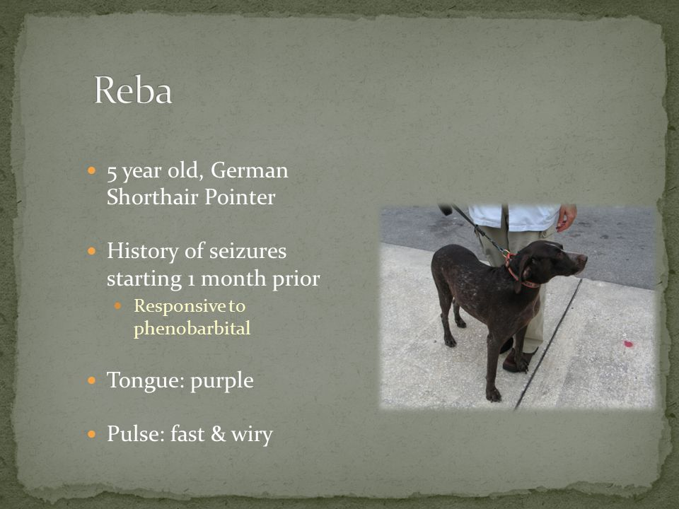 Reba 5 year old, German Shorthair Pointer