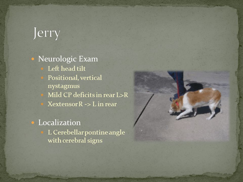 Jerry Neurologic Exam Localization Left head tilt