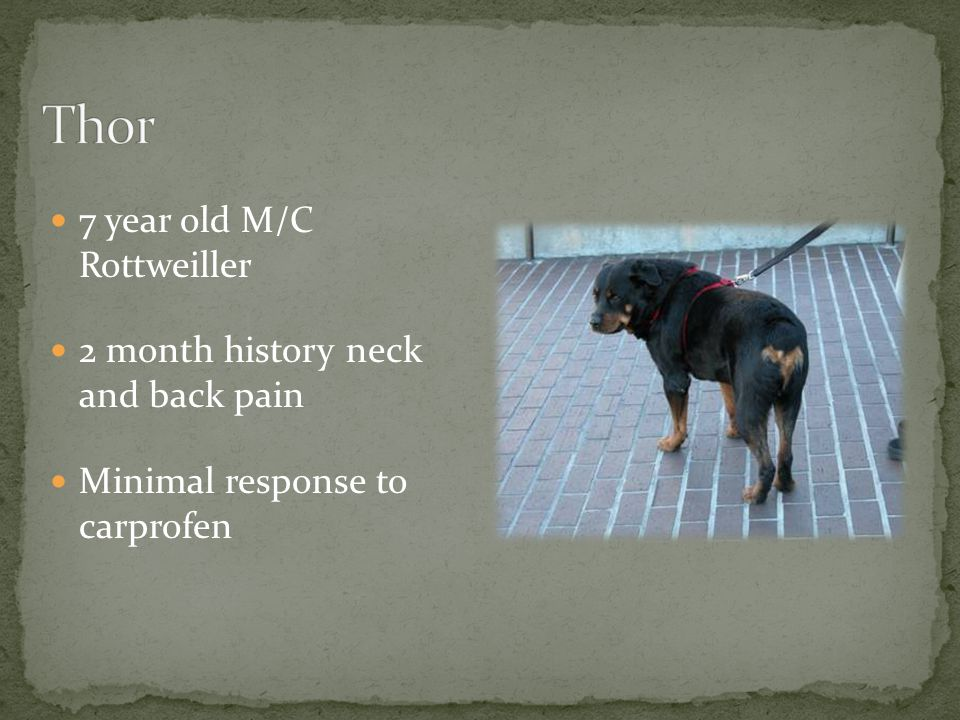 Thor 7 year old M/C Rottweiller 2 month history neck and back pain