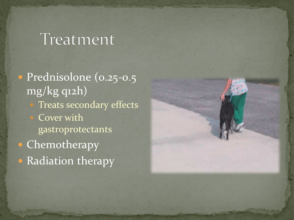 Treatment Prednisolone (0.25-0.5 mg/kg q12h) Chemotherapy