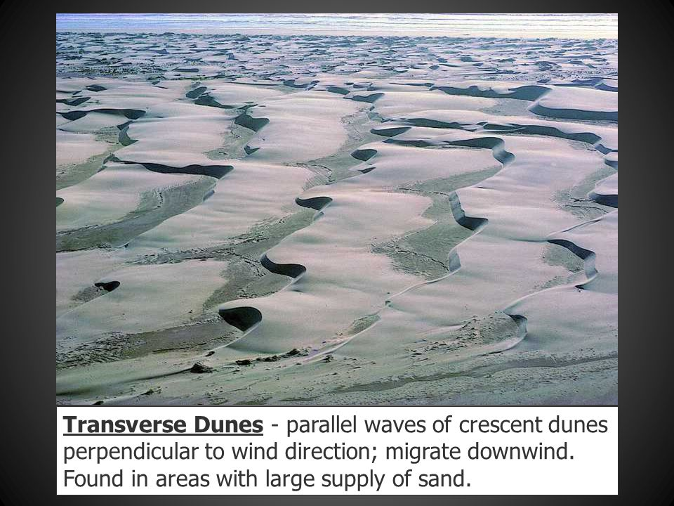 Transverse Dunes - parallel waves of crescent dunes perpendicular to wind direction; migrate downwind.