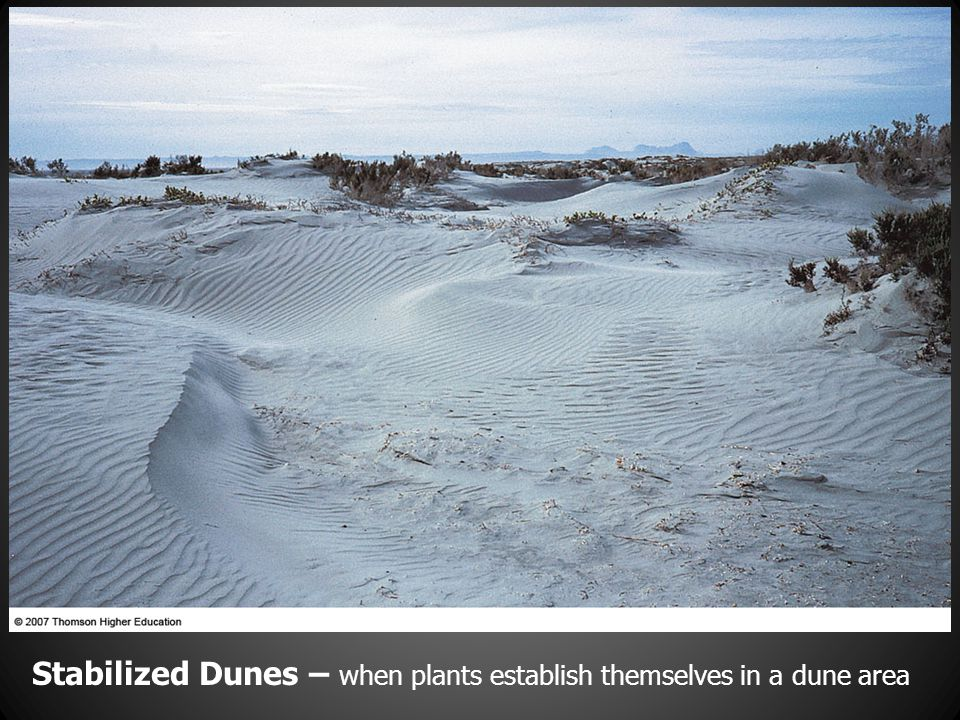 Stabilized Dunes – when plants establish themselves in a dune area