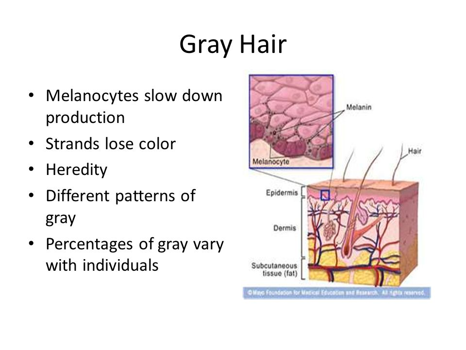 Gray Hair Melanocytes slow down production Strands lose color Heredity