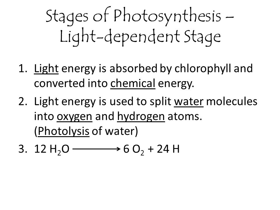 Stages of Photosynthesis – Light-dependent Stage