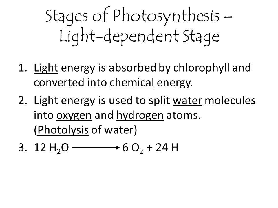 light dependent stage