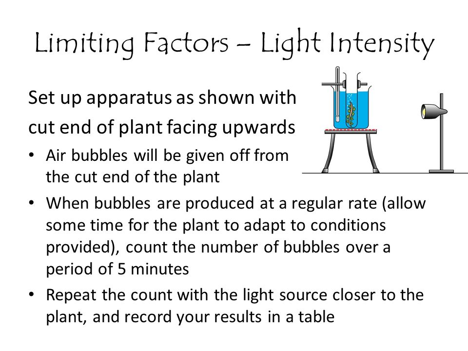 Limiting Factors – Light Intensity