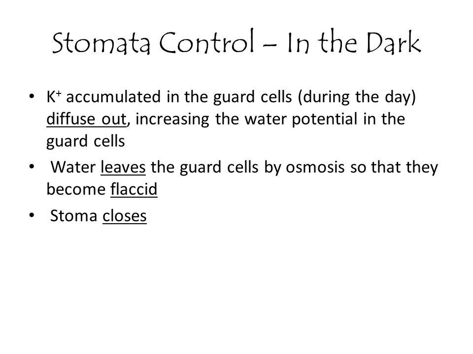 Stomata Control – In the Dark