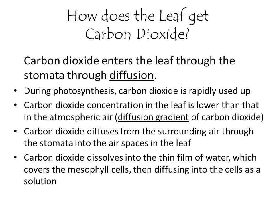 How does the Leaf get Carbon Dioxide