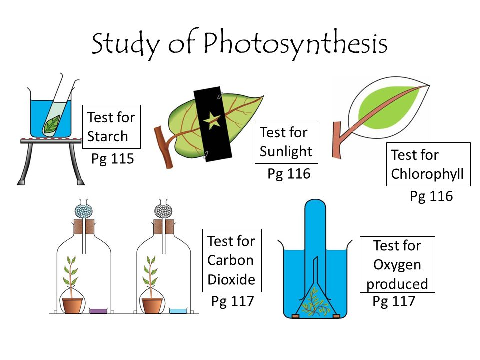 Study of Photosynthesis