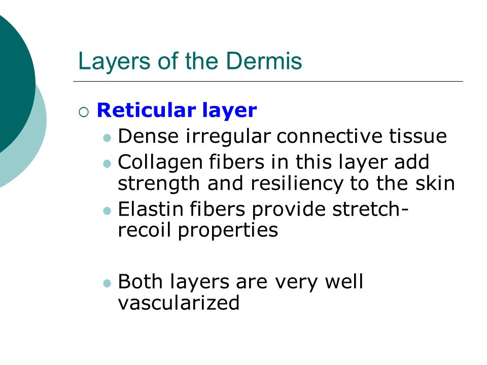 Layers of the Dermis Reticular layer Dense irregular connective tissue