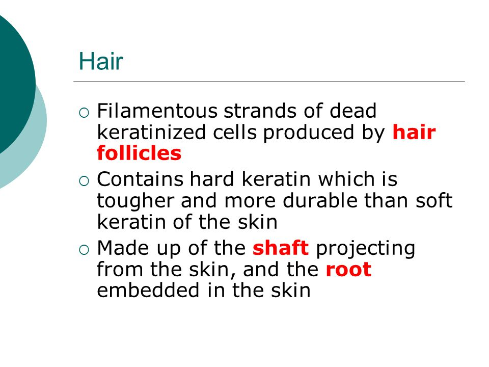 Hair Filamentous strands of dead keratinized cells produced by hair follicles.