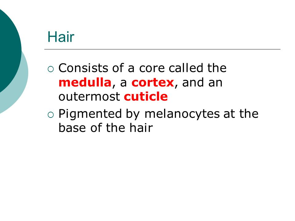 Hair Consists of a core called the medulla, a cortex, and an outermost cuticle.