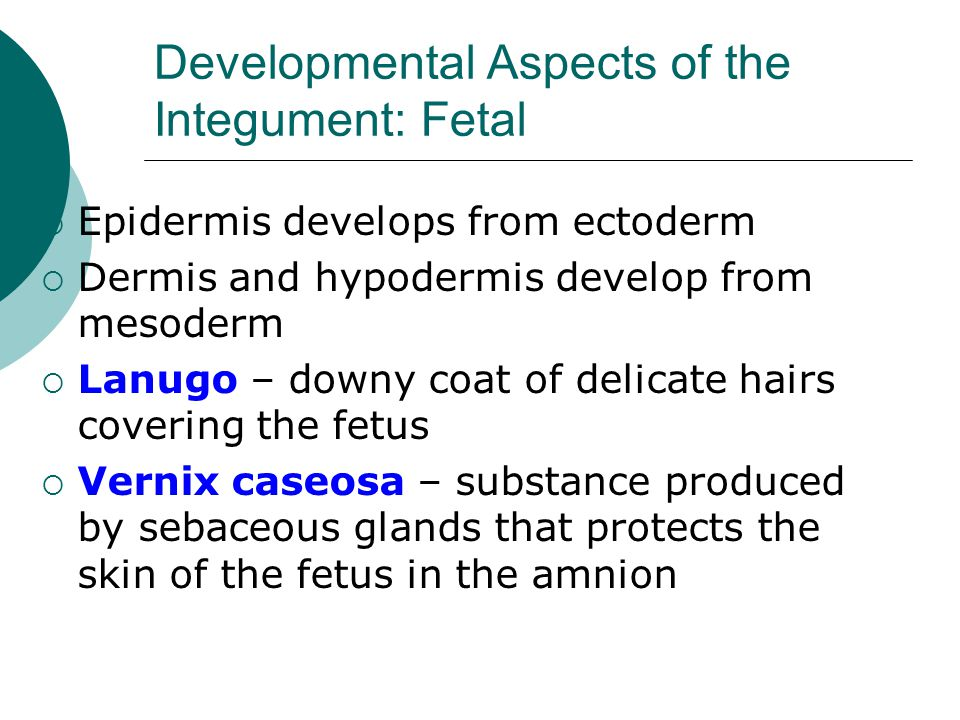 Developmental Aspects of the Integument: Fetal