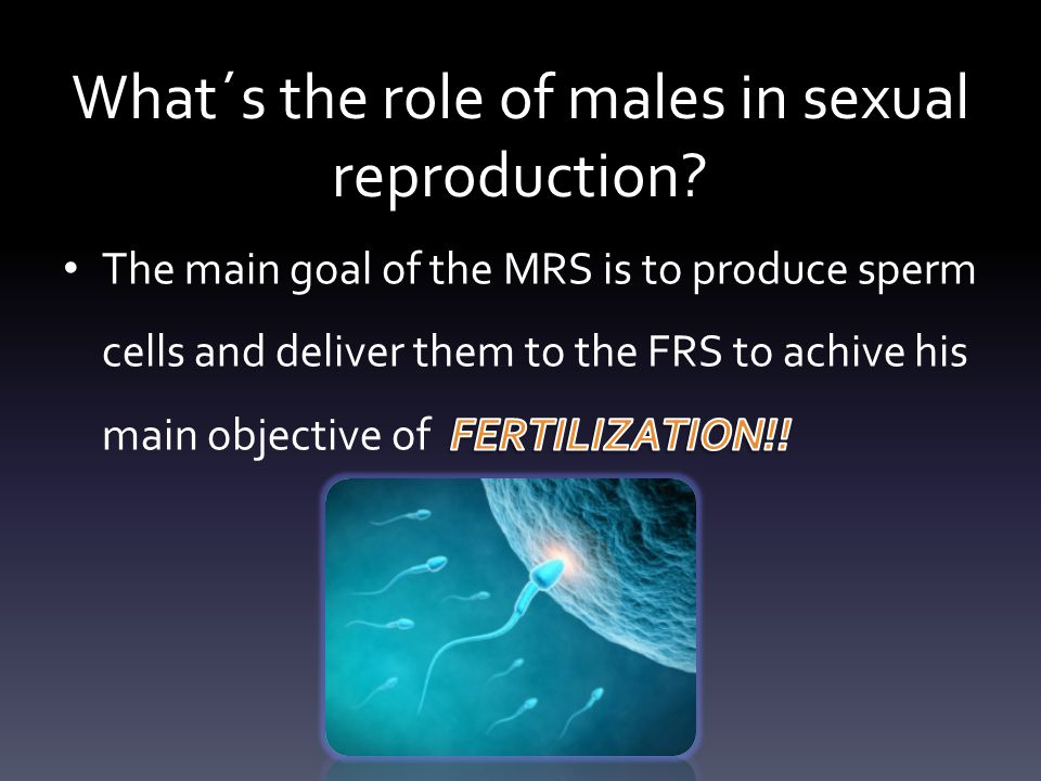 What´s the role of males in sexual reproduction