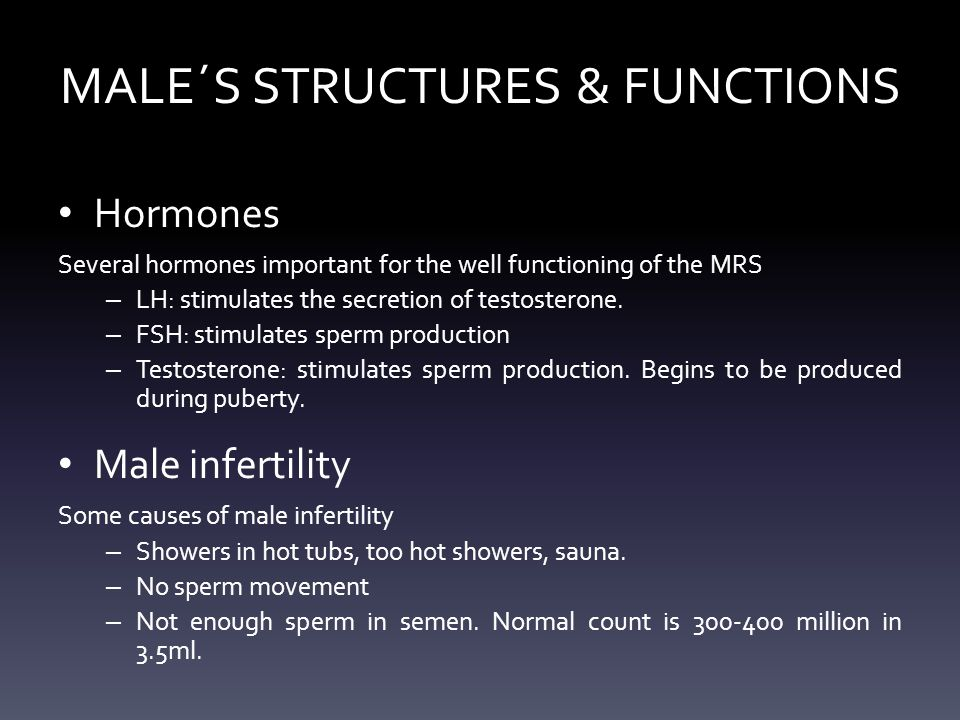 MALE´S STRUCTURES & FUNCTIONS