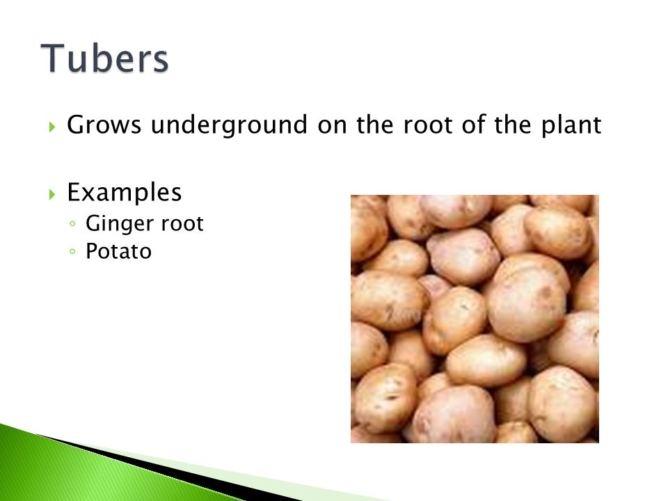 Tubers Grows underground on the root of the plant Examples Ginger root