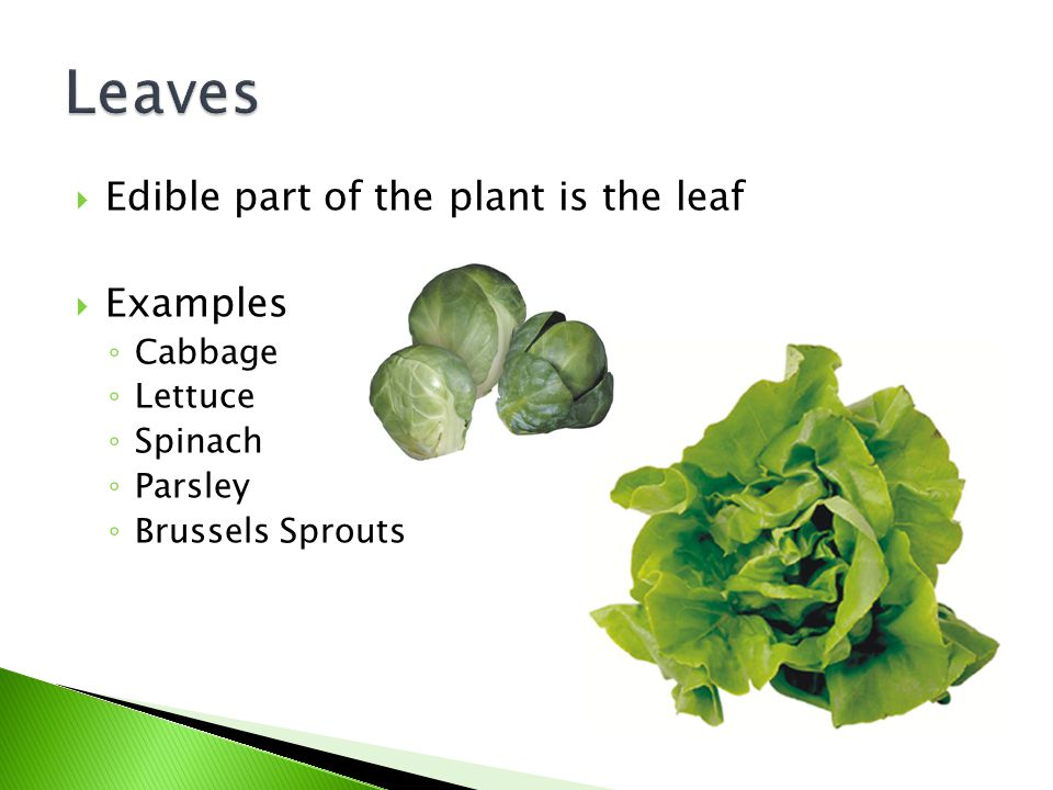 Leaves Edible part of the plant is the leaf Examples Cabbage Lettuce