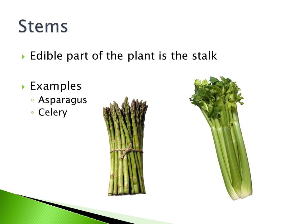 Stems Edible part of the plant is the stalk Examples Asparagus Celery