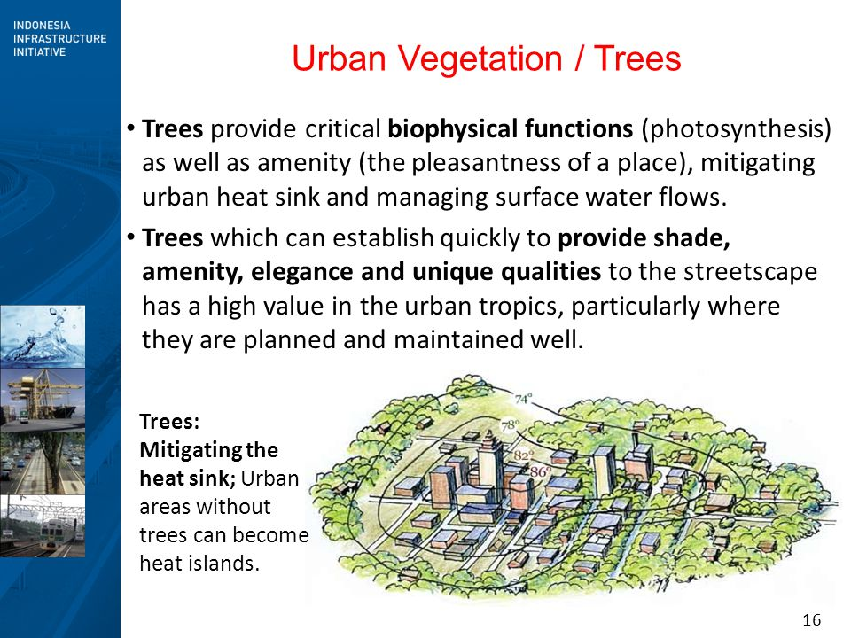 Urban Vegetation / Trees