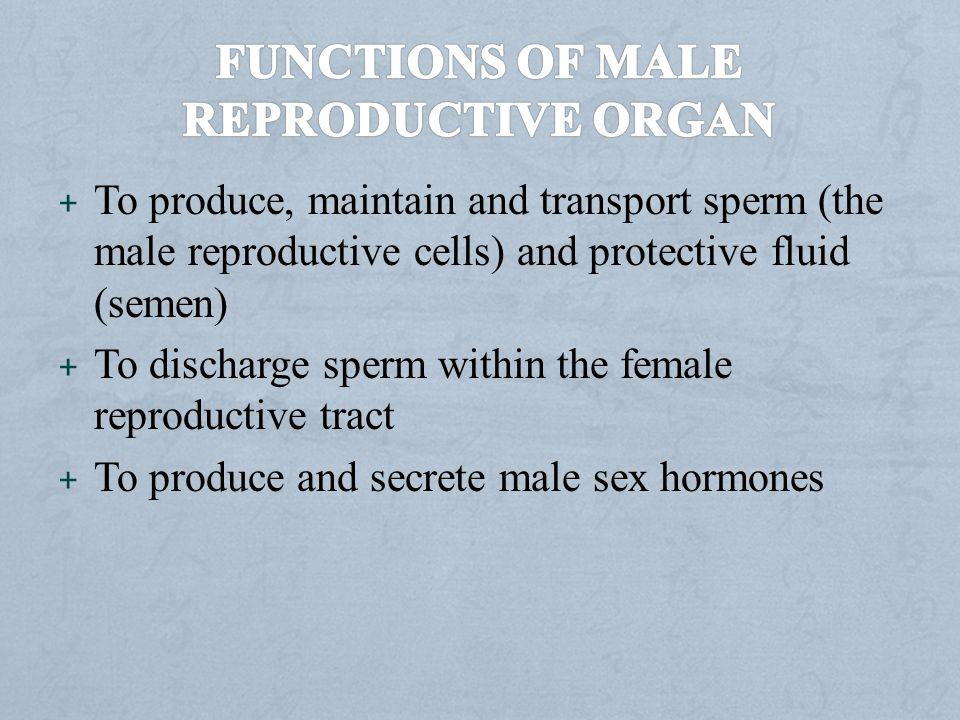 Functions of male reproductive organ