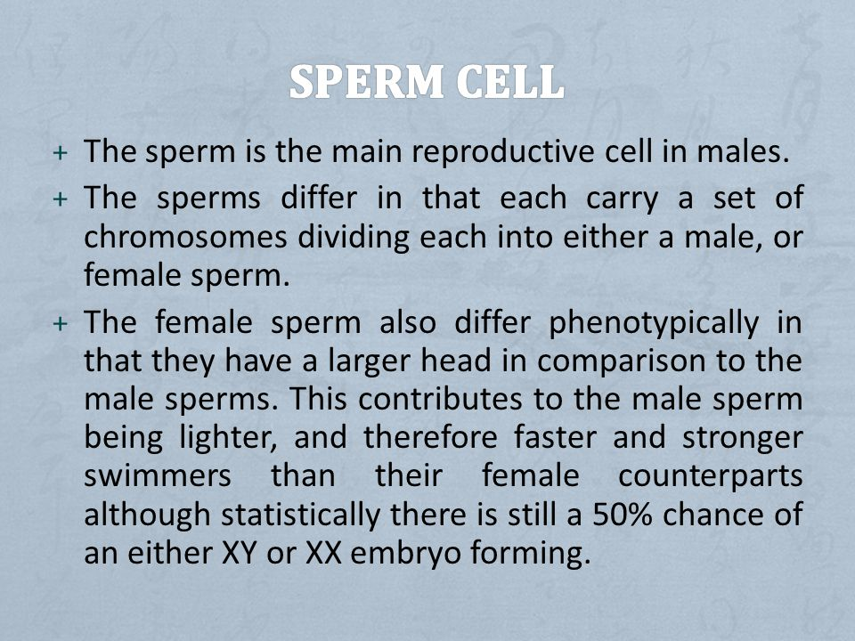 Sperm cell The sperm is the main reproductive cell in males.