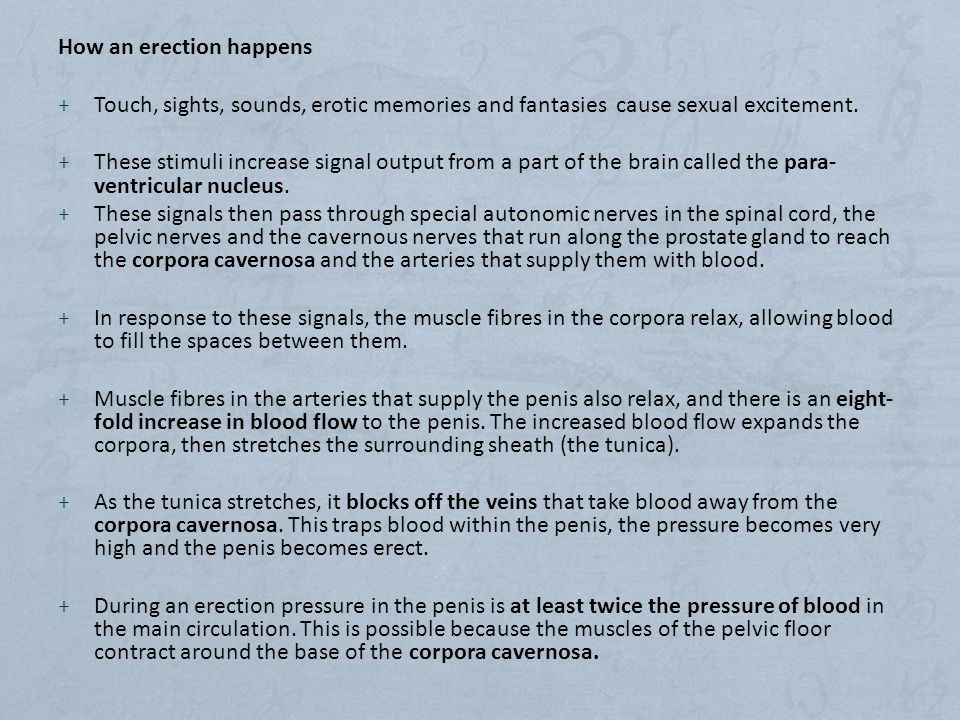 How an erection happens