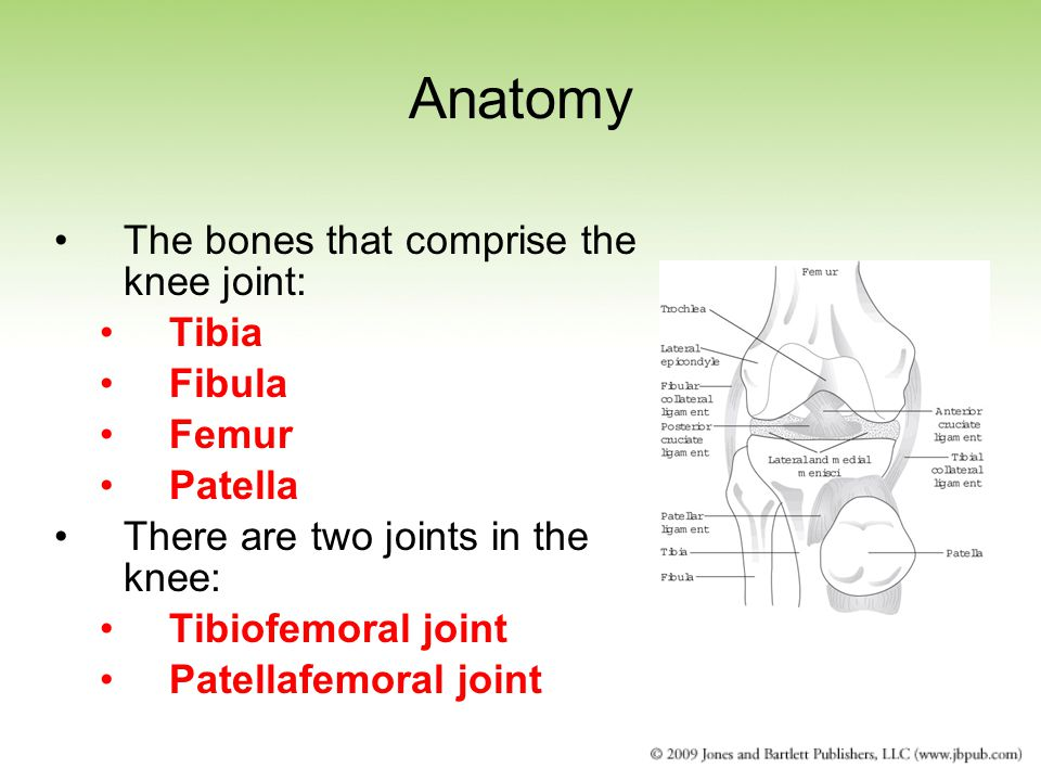 Anatomy The bones that comprise the knee joint: Tibia Fibula Femur