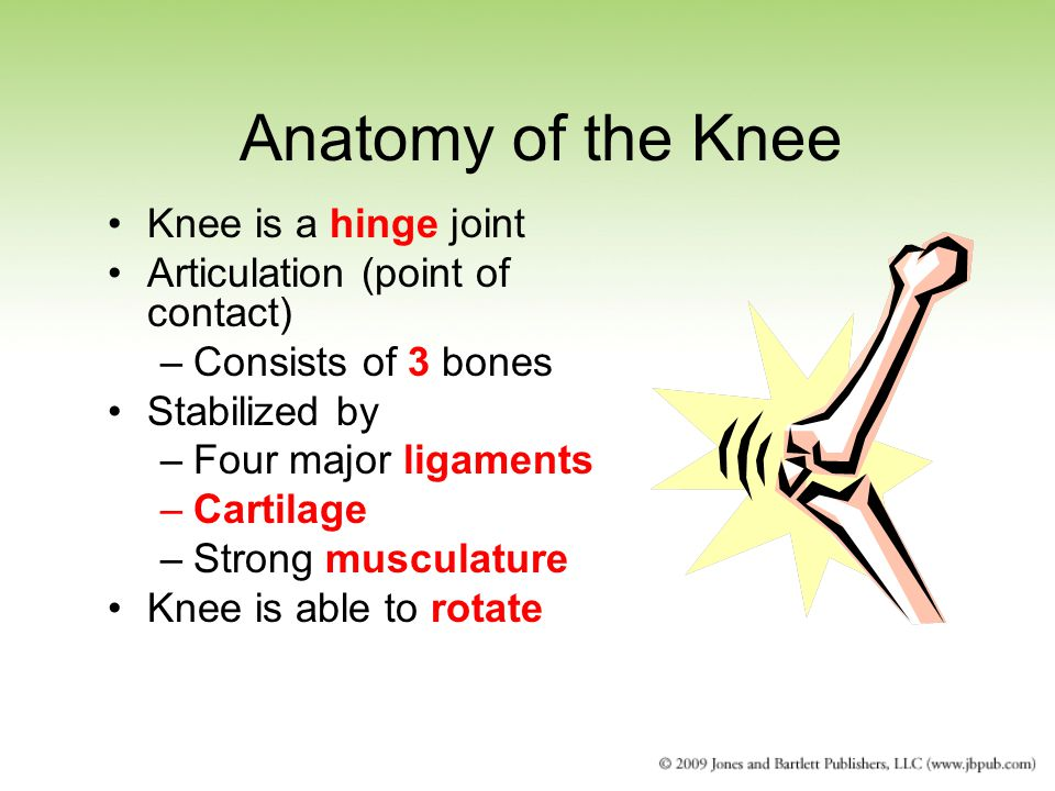 Anatomy of the Knee Knee is a hinge joint