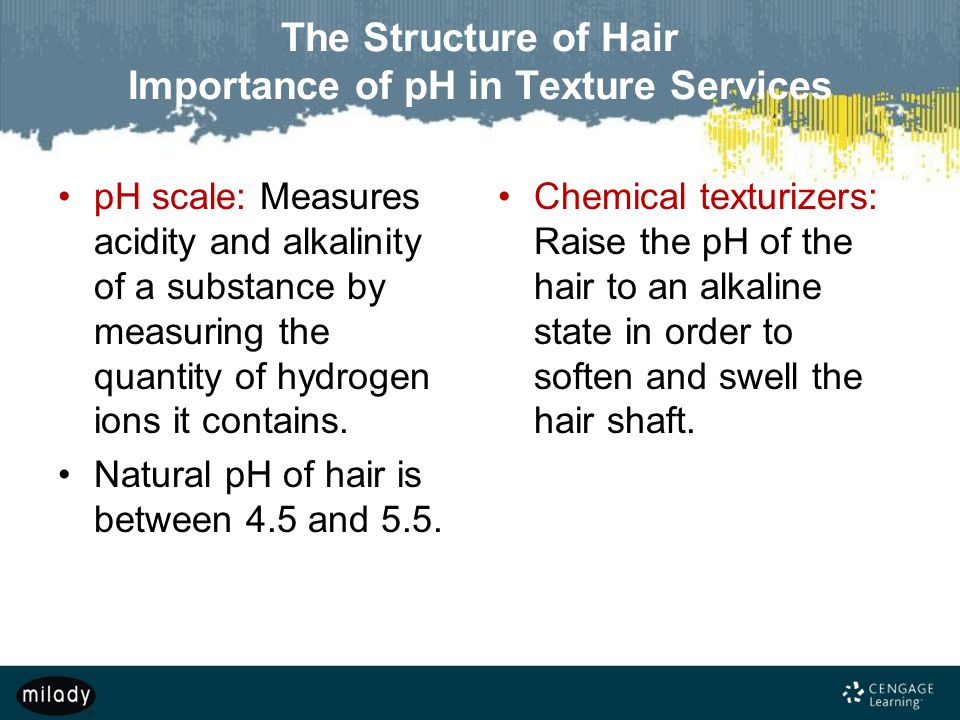 The Structure of Hair Importance of pH in Texture Services
