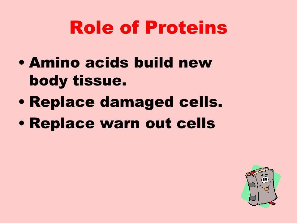 Role of Proteins Amino acids build new body tissue.
