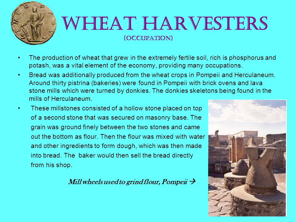 Wheat Harvesters {occupation}