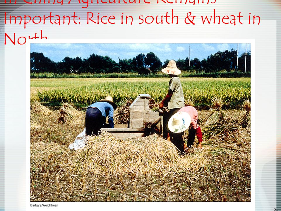 In China Agriculture Remains Important: Rice in south & wheat in North