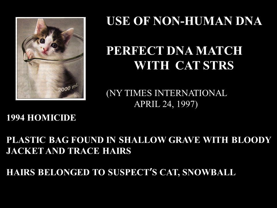 USE OF NON-HUMAN DNA PERFECT DNA MATCH WITH CAT STRS