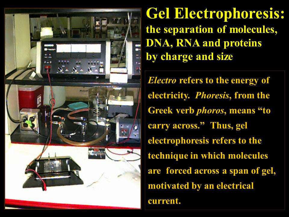 Gel Electrophoresis: the separation of molecules,