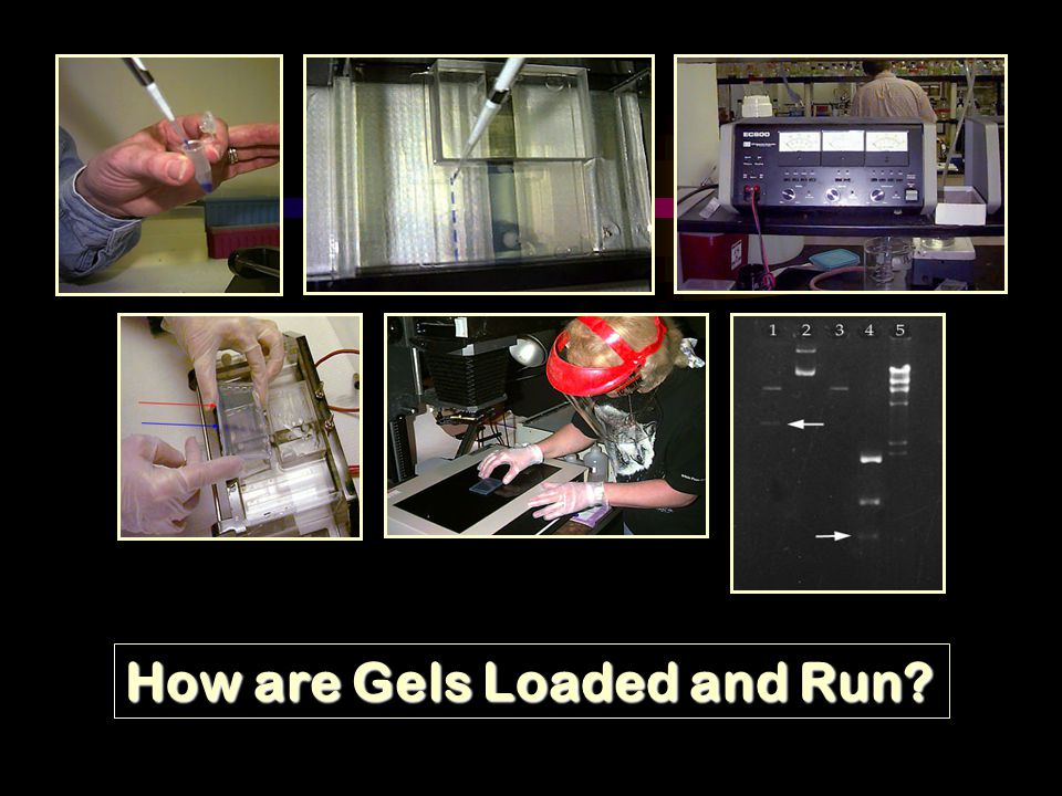 How are Gels Loaded and Run