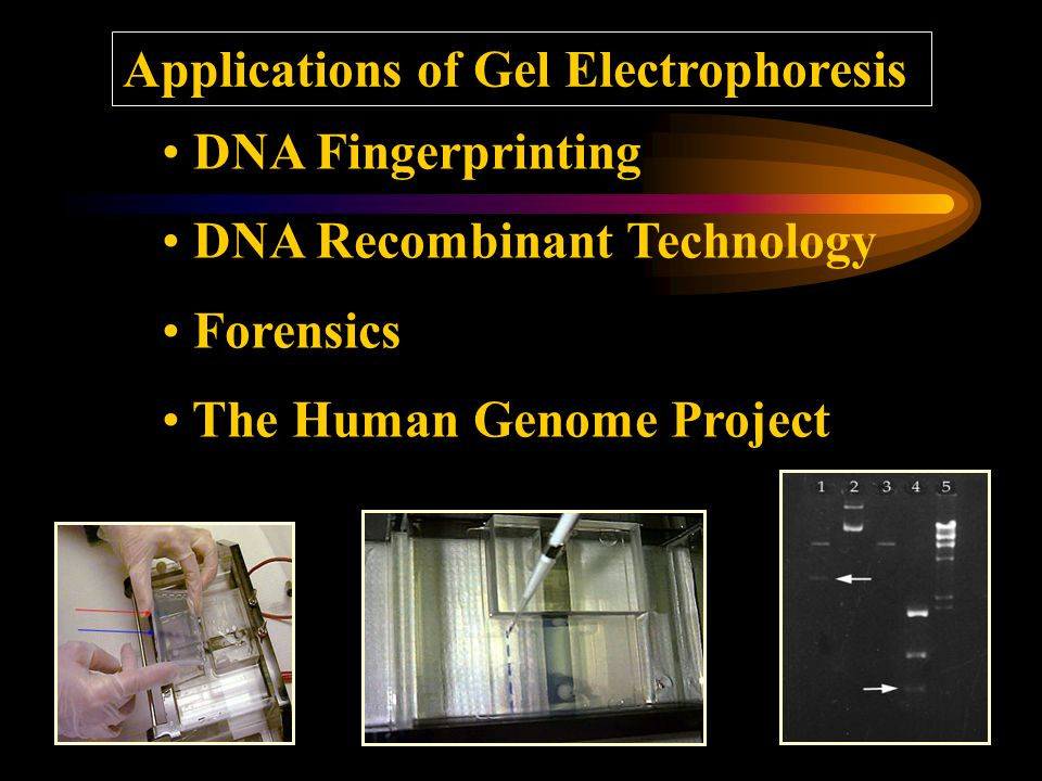 Applications of Gel Electrophoresis
