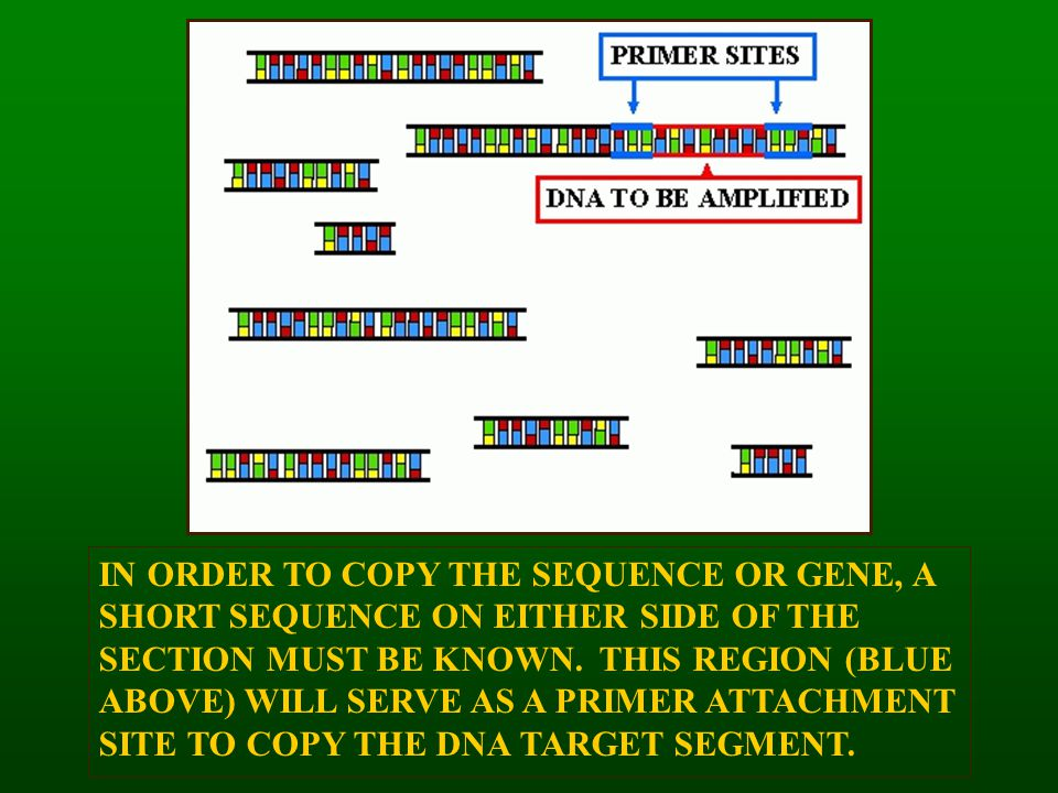IN ORDER TO COPY THE SEQUENCE OR GENE, A SHORT SEQUENCE ON EITHER SIDE OF THE SECTION MUST BE KNOWN.