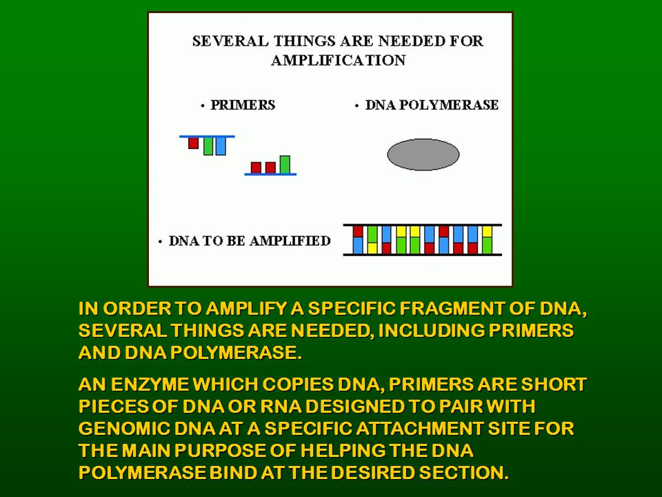 IN ORDER TO AMPLIFY A SPECIFIC FRAGMENT OF DNA, SEVERAL THINGS ARE NEEDED, INCLUDING PRIMERS AND DNA POLYMERASE.
