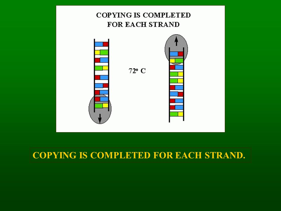 COPYING IS COMPLETED FOR EACH STRAND.