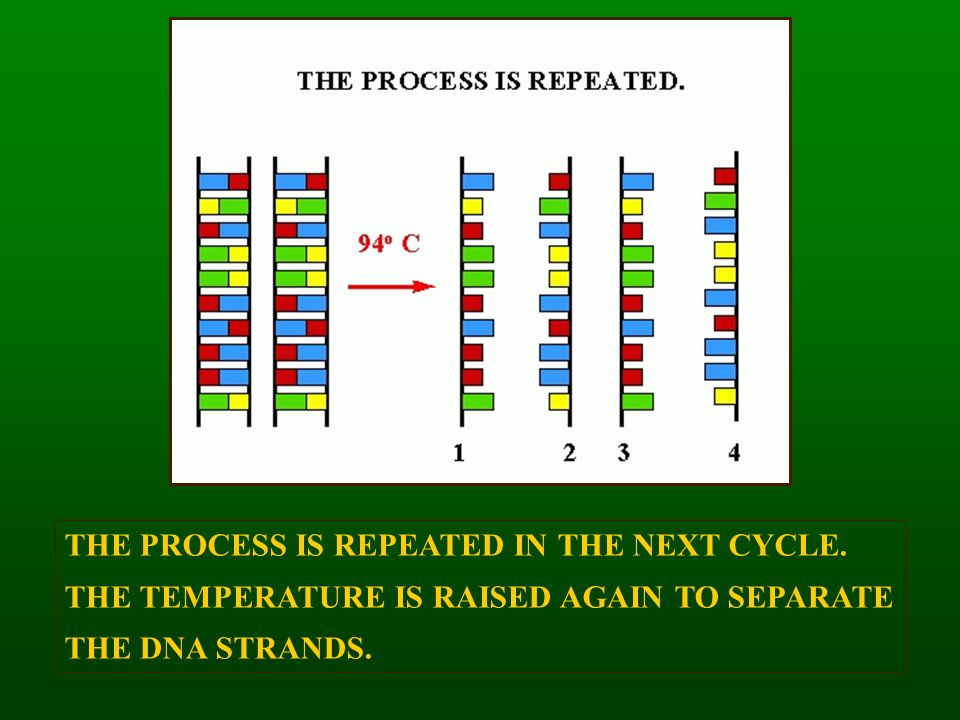 THE PROCESS IS REPEATED IN THE NEXT CYCLE.