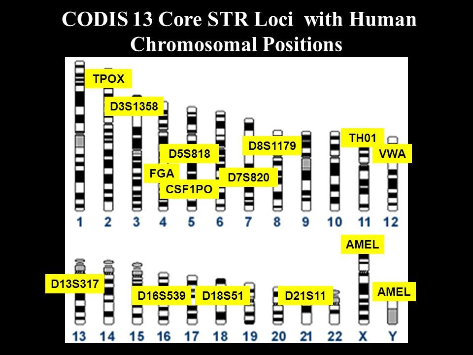 CODIS 13 Core STR Loci with Human Chromosomal Positions